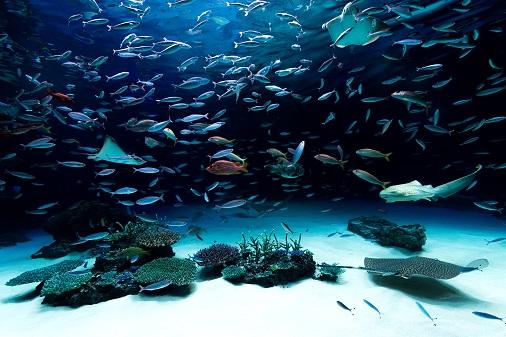 【朗報】水族館で一番楽しいコーナー、決まる