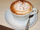 cappuccino-gatto