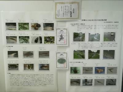 生物研究 展示「西高水族館」