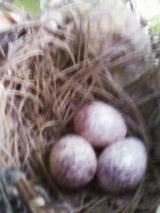 何鳥かの卵