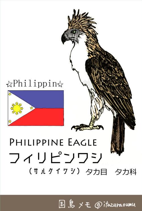国鳥_フィリピン1