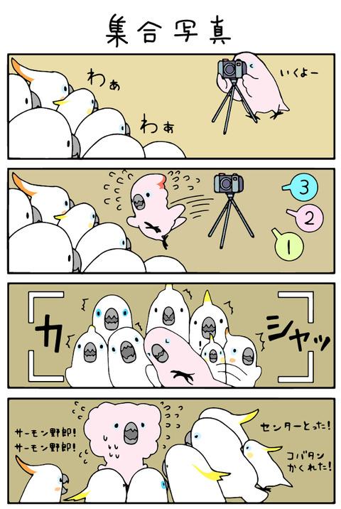 ふんわりオウム4
