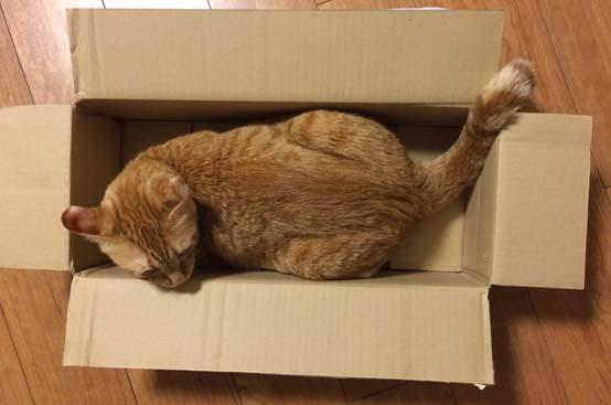 チョック箱