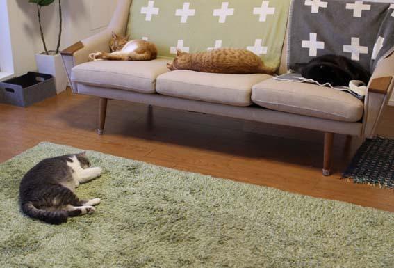 猫と暮らす1