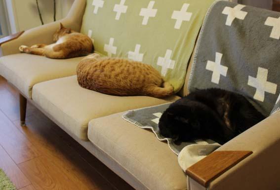 猫と暮らす3