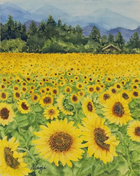 松本直次 2020-07「明野のひまわり畑」(A4)