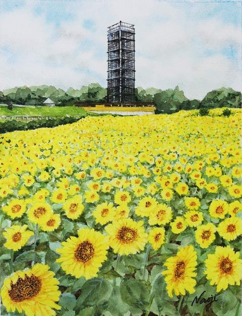 松本直次 2020-08「浜名湖ガーデンパークの向日葵」(A4)