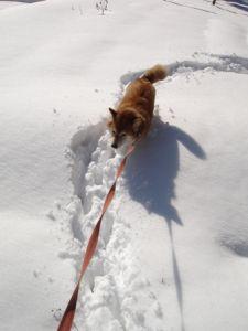 雪の上を走るゴン太