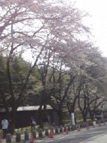 みぃちゃんのまんぷく記録-090405_143145.jpg