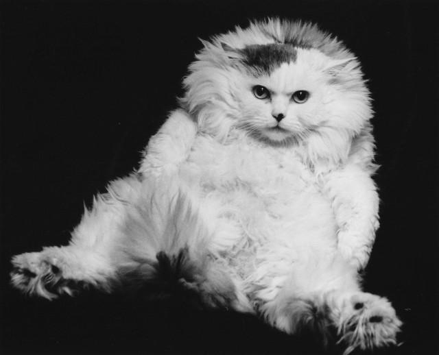 榊原俊寿写真展「猫の世界」
