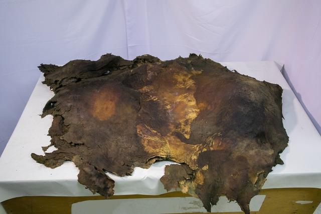 ケナガマンモスの皮膚_冷凍標本