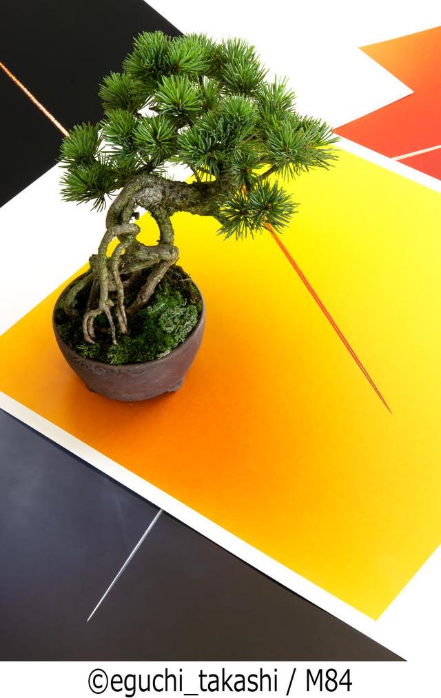 盆栽と写真の二人展