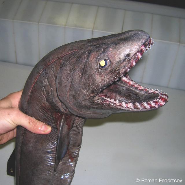 深海生物_画像