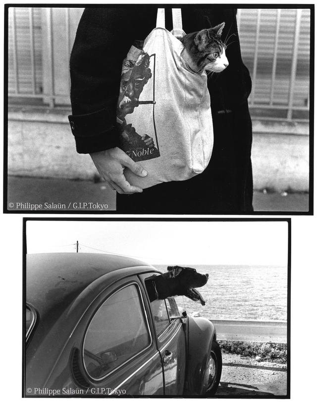 Philippe Salaün写真展「猫や犬など動物達」