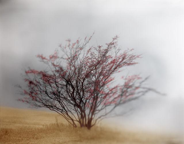アナログとデジタル、リアリティと幻想が混在する不思議!文本貴士氏の写真展「追憶」を開催へ【NEXT GENERATION】