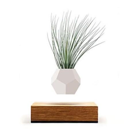 植物が浮かぶプランター
