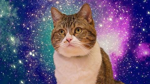 宇宙猫イメージ
