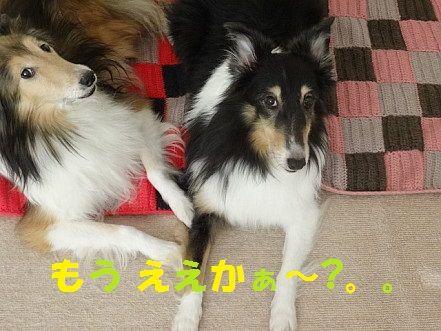 しゅせDSC04554