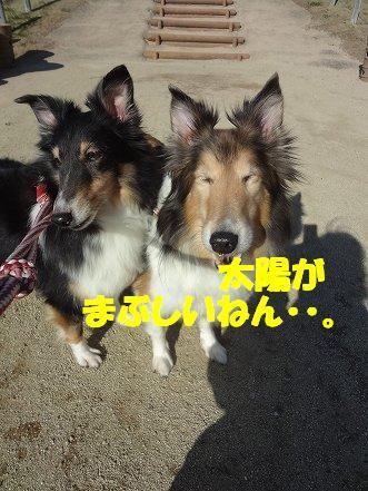 しゅせDSC08434