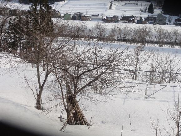 00822雪のキウイ棚594