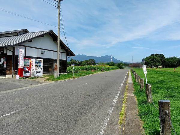 haniwanosato-himawari_4