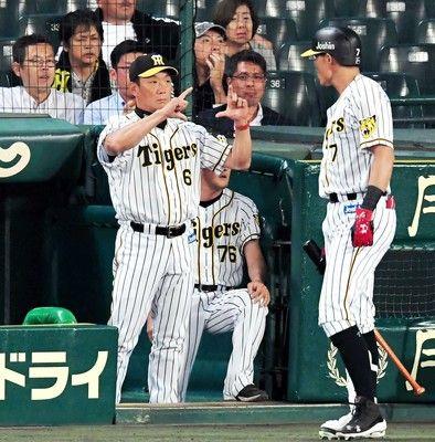 阪神・金本監督、交流戦ドロー締めも「前向きに」ミス山積も敗戦免れた