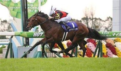 【マイルCS】3歳馬ステルヴィオ直線インこじ開けGI初制覇!ビュイック「思った通りの競馬できた」