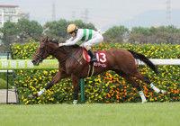 ローズS勝ち馬カンタービレは秋華賞で武豊とコンビ結成