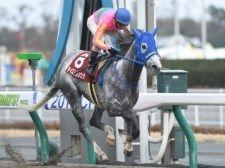 古川吉洋騎手が9日間の騎乗停止火曜開催のためGIのテイエムジンソク騎乗は可能