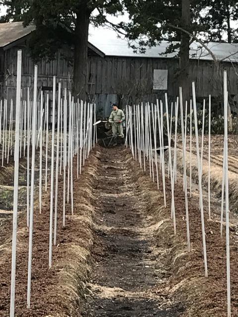 アスパラ畑 森川農園