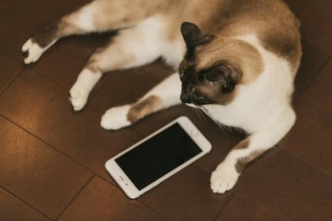 cat9V9A9026_TP_V1