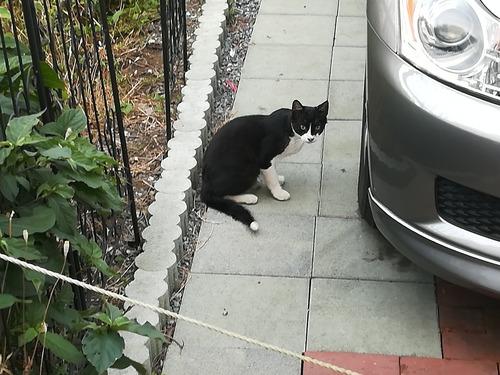 猫NO.1096