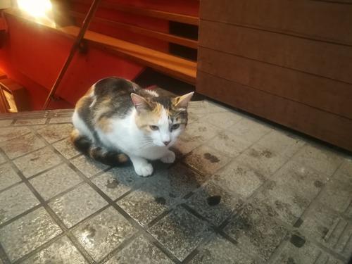 猫NO.1101