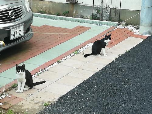 猫NO.1095