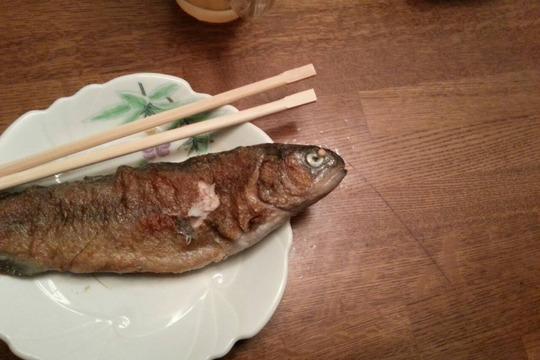 yamame,iwananohoukosagasi3587