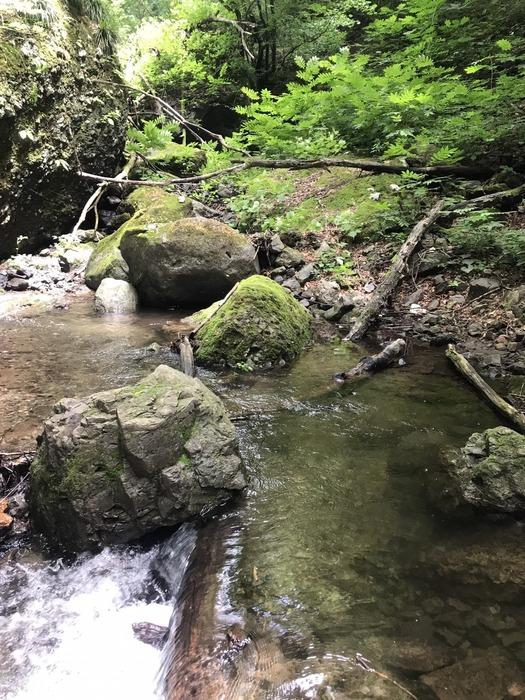 yamame,iwananohoukosagasi37312