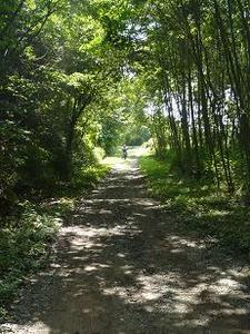 林の中の道 中島