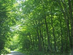 木漏れ陽の山中の路