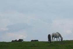 荒川高原 白馬
