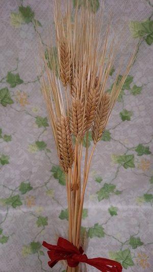 麦の穂(大麦)