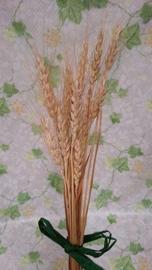麦の穂(小麦)