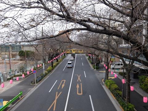 桜まつり 006