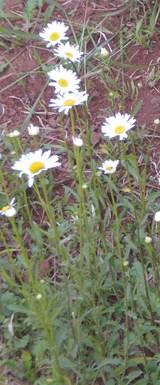 2010_0514_104515-CIMG2070
