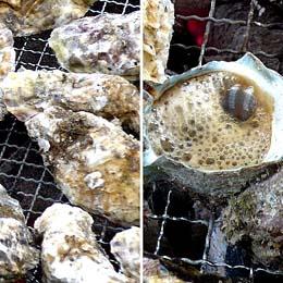 牡蛎喰い2