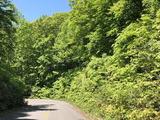 2020_0530岩木山の新緑0003