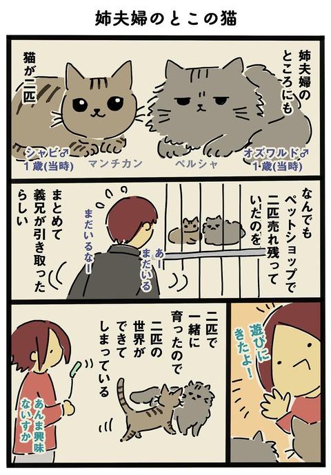 iwako_cat_250