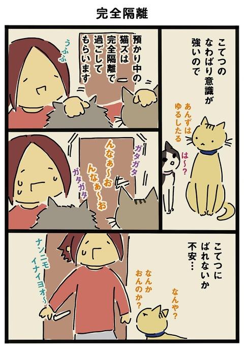 iwako_cat_254