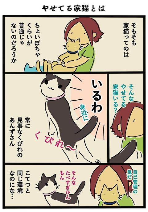 iwako_cat_410