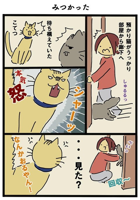 iwako_cat_261