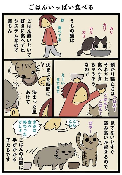 iwako_cat_260